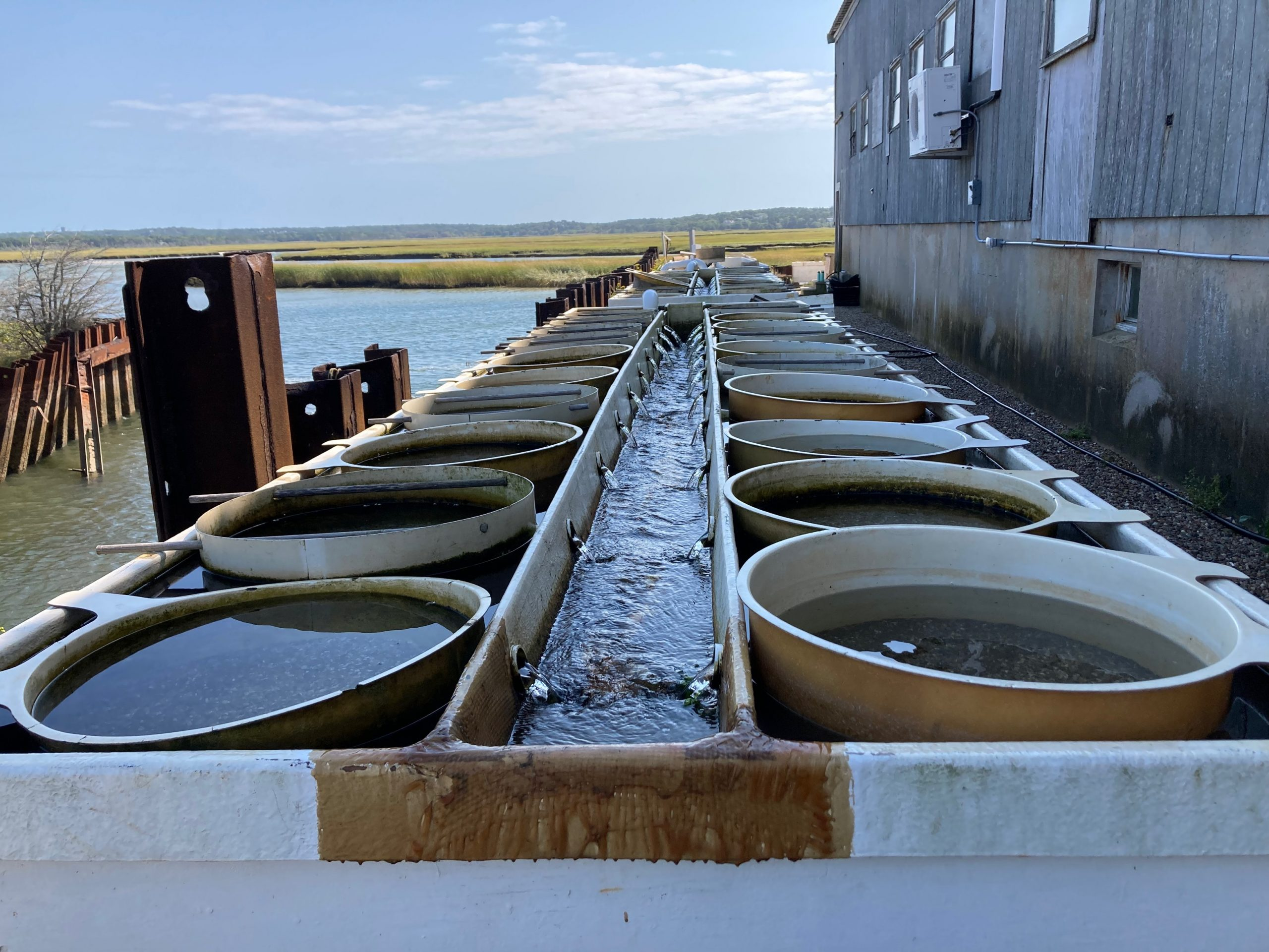 Linear upwellers containing chambers of shellfish seed at A.R.C.